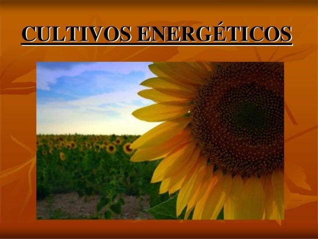 CULTIVOS ENERGCULTIVOS ENERGÉÉTICOSTICOS