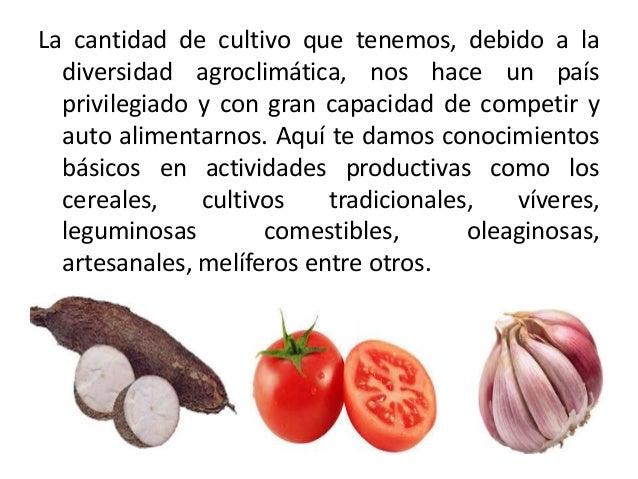 Cultivos tradicionales en la rep blica dominicana for Que son cultivos asociados
