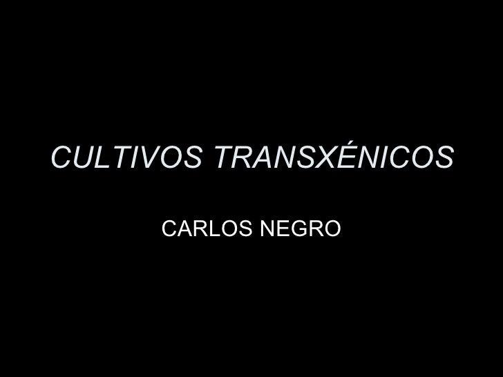 CULTIVOS TRANSXÉNICOS CARLOS NEGRO