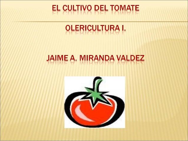 """   TAXONOMIA:     NOMBRE CIEITIFICO: Solanum lycopersicon.     ORIGEN:     * Tiene su origen en la palabra azteca """"tomatl..."""