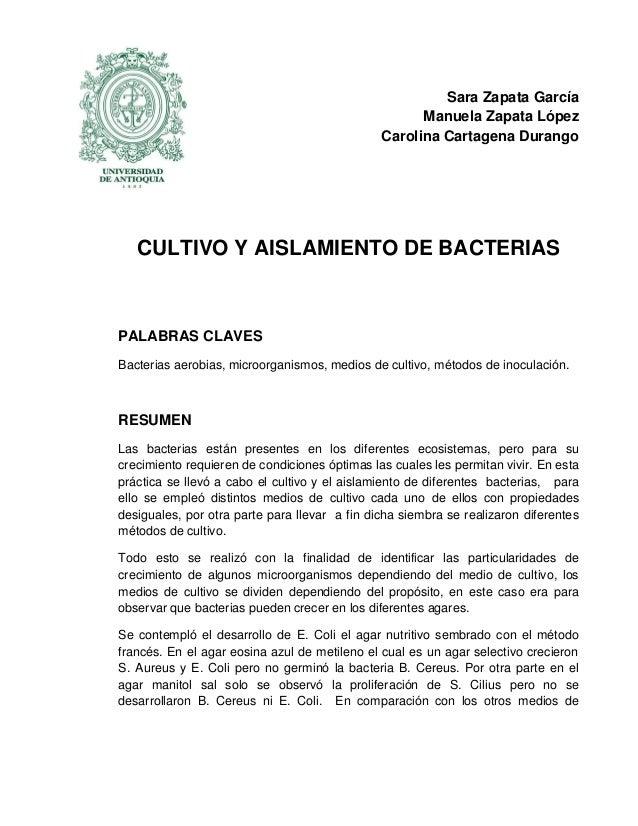 Sara Zapata García Manuela Zapata López Carolina Cartagena Durango  CULTIVO Y AISLAMIENTO DE BACTERIAS  PALABRAS CLAVES Ba...