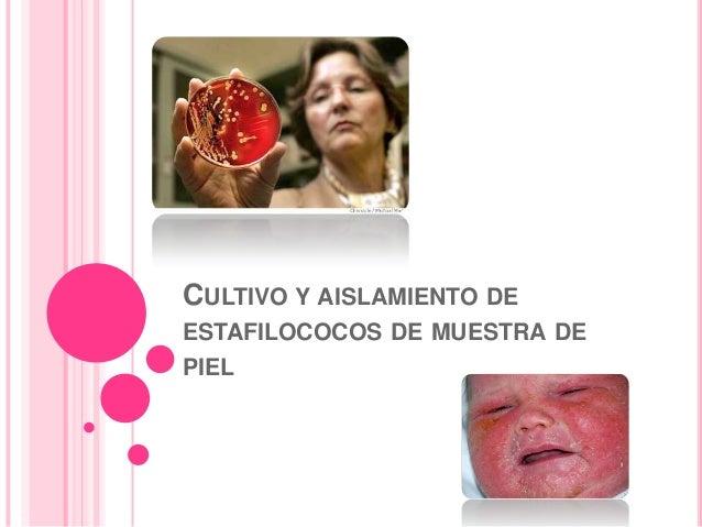 CULTIVO Y AISLAMIENTO DE ESTAFILOCOCOS DE MUESTRA DE PIEL