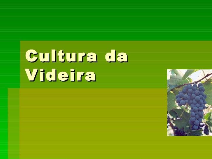 Cultura da Videira