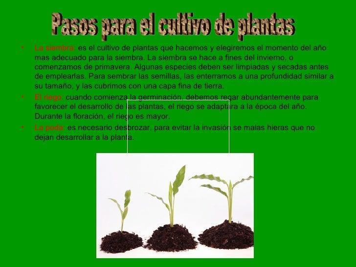 Cultura de las plantas escolares for Como evitar que salga hierba en el jardin