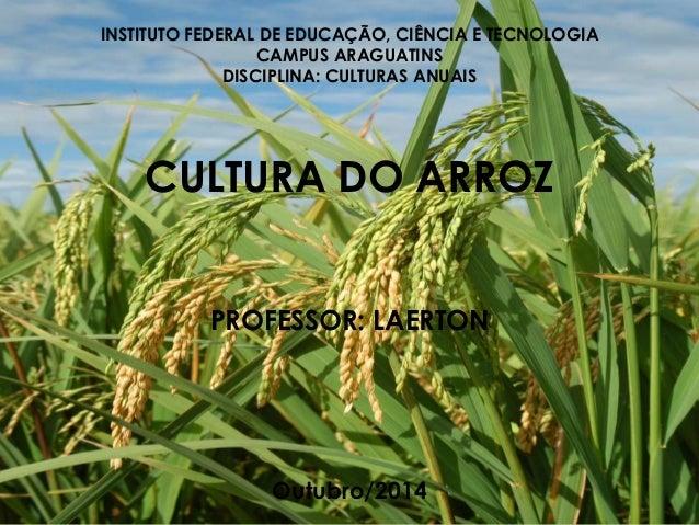 INSTITUTO FEDERAL DE EDUCAÇÃO, CIÊNCIA E TECNOLOGIA CAMPUS ARAGUATINS DISCIPLINA: CULTURAS ANUAIS CULTURA DO ARROZ PROFESS...