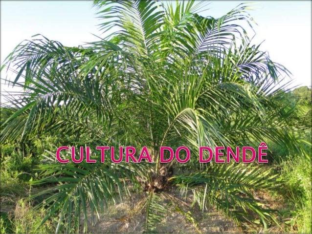    O dendezeiro (Elaeis guineensis), é uma    palmeira oleaginosa originária da Costa    Ocidental da África (Golfo da Gu...