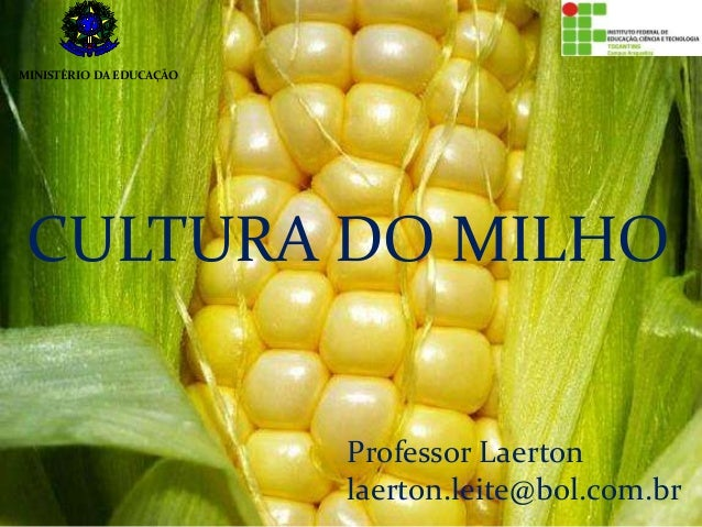 CULTURA DO MILHO Professor Laerton laerton.leite@bol.com.br MINISTÉRIO DA EDUCAÇÃO