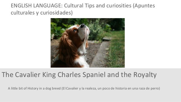 A little bit of History in a dog breed (El Cavalier y la realeza, un poco de historia en una raza de perro) The Cavalier K...
