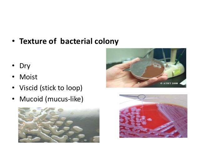 cultural characteristics of bacteria pdf
