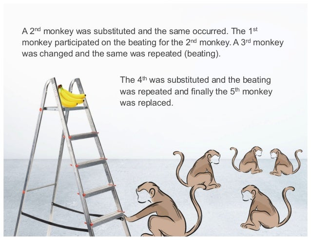 A 2nd monkey was substituted and the same occurred. The 1st monkey participated on the beating for the 2nd monkey. A 3rd m...