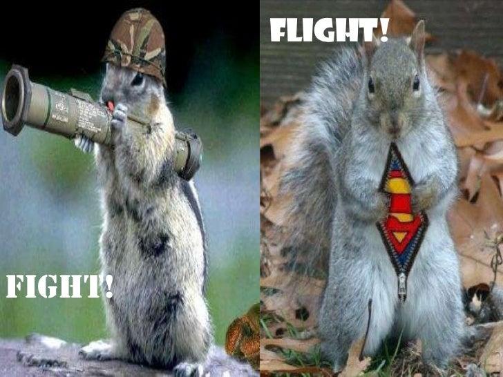 FLIGHT!FIGHT!
