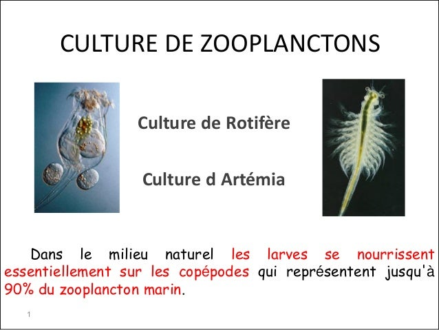 CULTURE DE ZOOPLANCTONSCulture de RotifèreCulture d ArtémiaDans le milieu naturel les larves se nourrissentessentiellement...