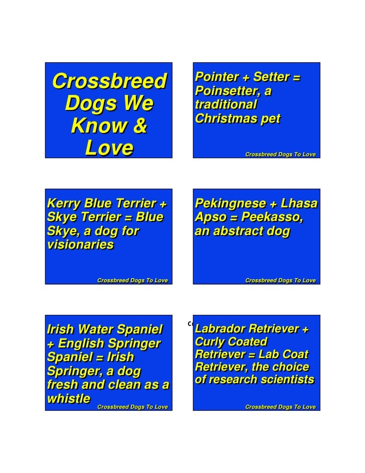 Pointer + Setter =  Crossbreed                            Poinsetter, a   Dogs We                              traditional...