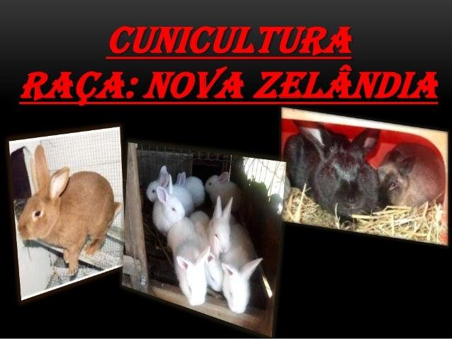CUNICULTURARAÇA: NOVA ZELÂNDIA