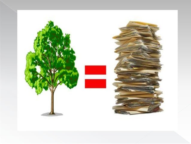 Cu nto papel se puede fabricar de un arbol 2 for Cuanto miden los arboles