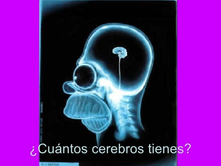 ¿Cuántos cerebros tienes?