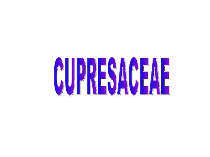 CUPRESACEAE