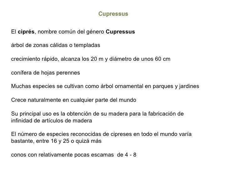 Cupressaceae for Arboles perennes de crecimiento rapido en argentina