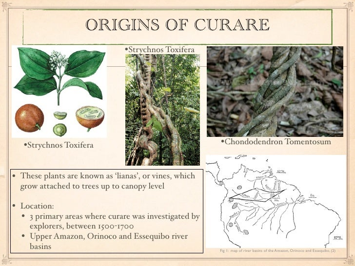 an analysis of curare a poison 2: what if the poison wasn't curare sure, curare is pretty safe to eat, but many other poisons aren't he didn't know what poison it was before he just put it in his mouth i'm.