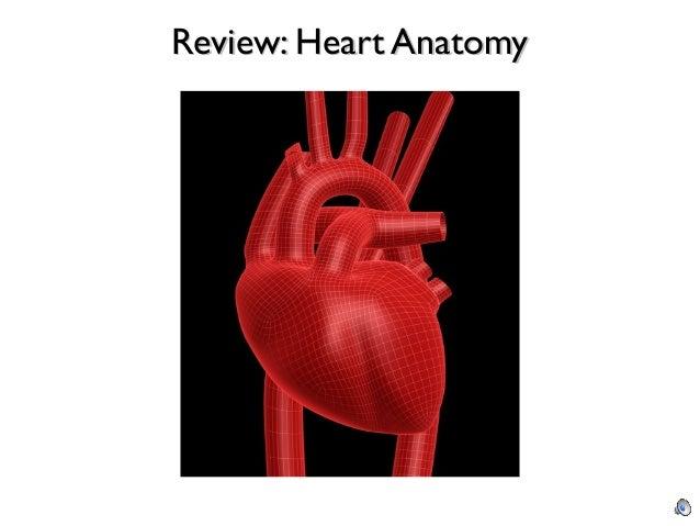 Cure cardiac anatomy physiology questions