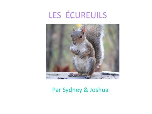 LES ÉCUREUILS Par Sydney & Joshua