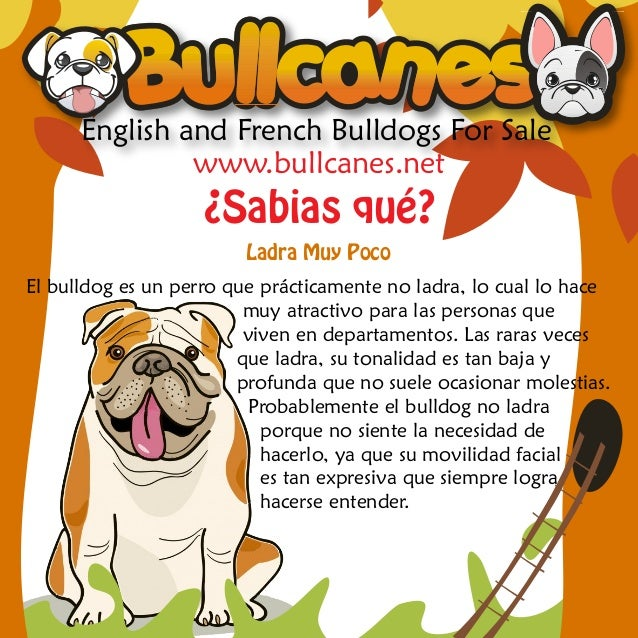 English and French Bulldogs For Sale               www.bullcanes.net                   ¿Sabias qué?                       ...