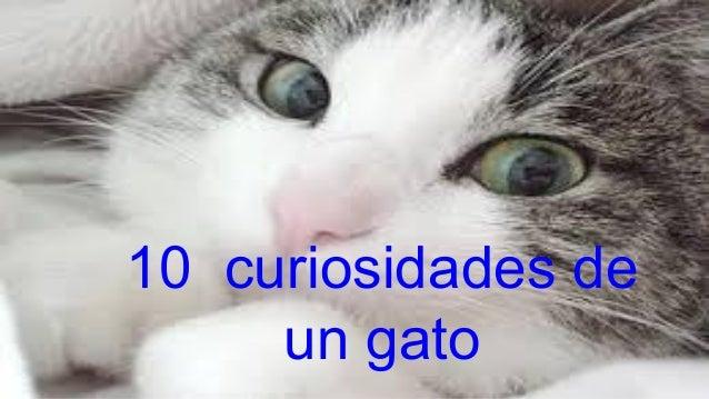 10 curiosidades de un gato