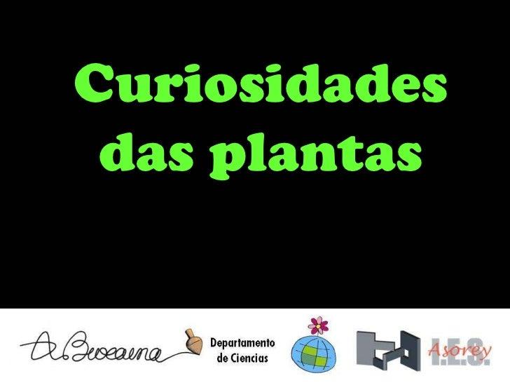 Curiosidades das plantas