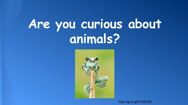 Are you curious about animals?  http://goo.gl/CV8XQI