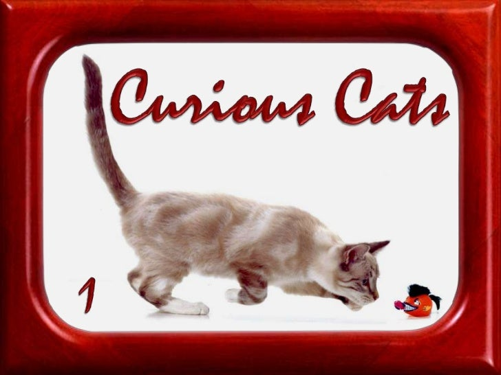 Curious Cats<br />1<br />