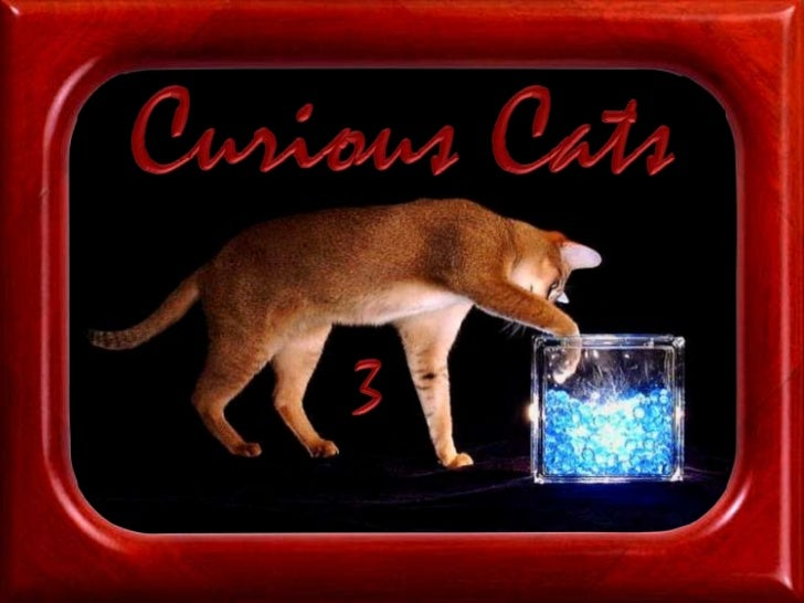 Curious Cats<br />3<br />