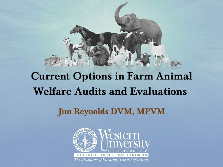 Current Options in Farm Animal Welfare Audits and Evaluations Jim Reynolds DVM, MPVM