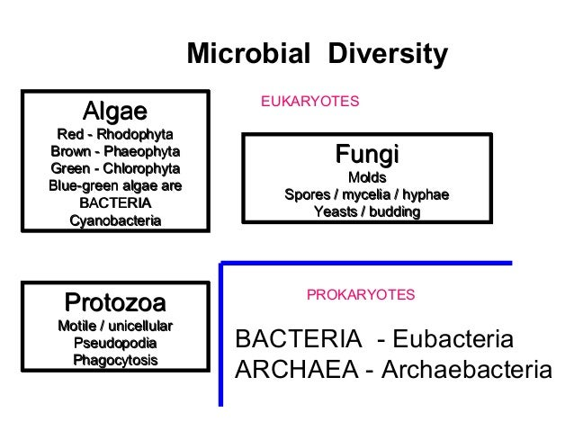 Current trends and opportunities in microbiological researchs