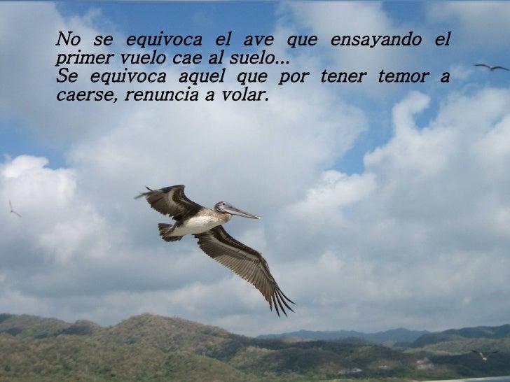 No se equivoca el ave que ensayando el primer vuelo cae al suelo... Se equivoca aquel que por tener temor a caerse, renunc...