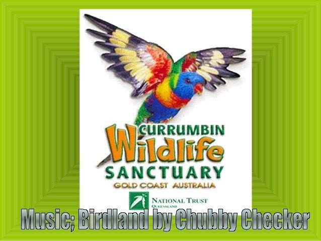 Currumbin sanctuary
