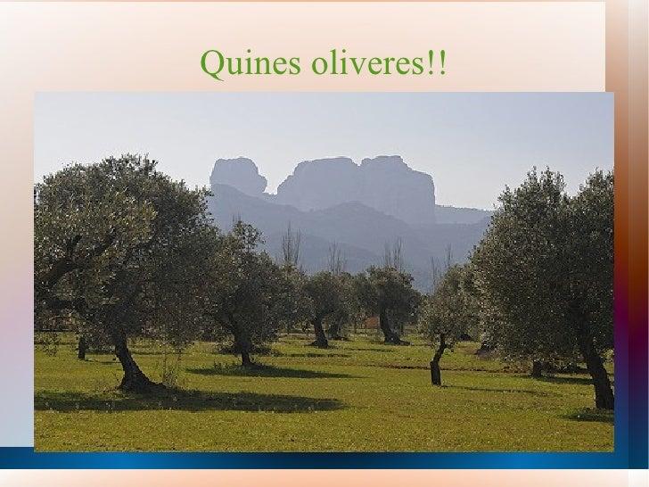 Quines oliveres!!