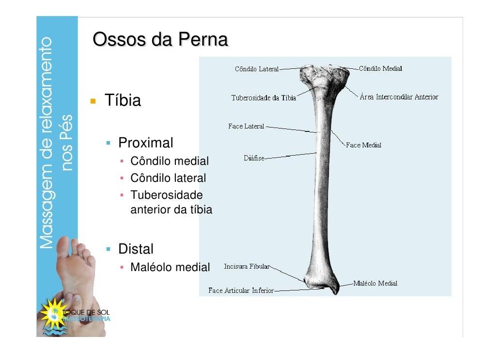 Increíble Anatomía Tibia Distal Composición - Anatomía de Las ...