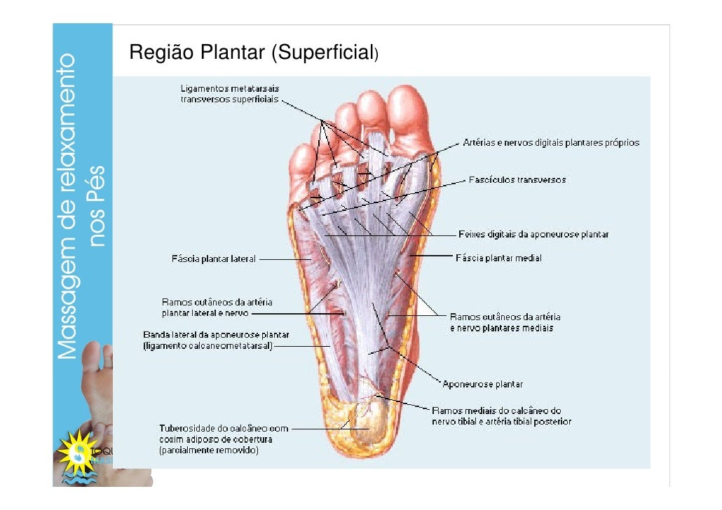 Fantástico Plantar En La Anatomía Inspiración - Anatomía de Las ...