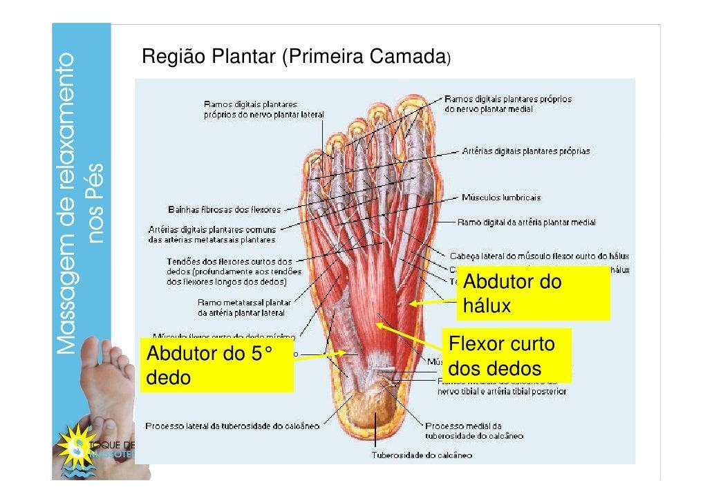 Vistoso Músculos De Los Dedos Anatomía Colección - Imágenes de ...