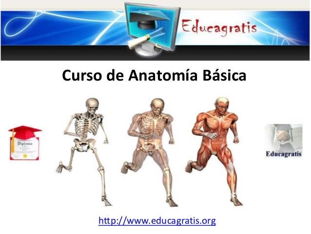 Curso de anatomía básica