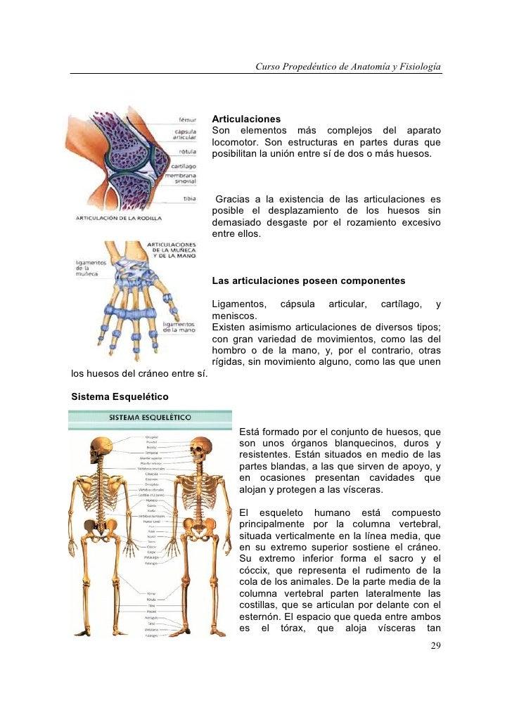 Dorable Anatomía Humana Y Fisiología Curso En Línea Composición ...