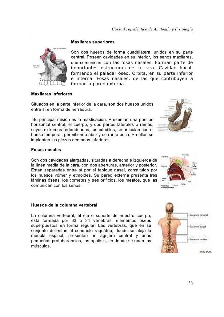 Hermosa Agujeros De La Anatomía Y La Fisiología Pdf Foto - Imágenes ...