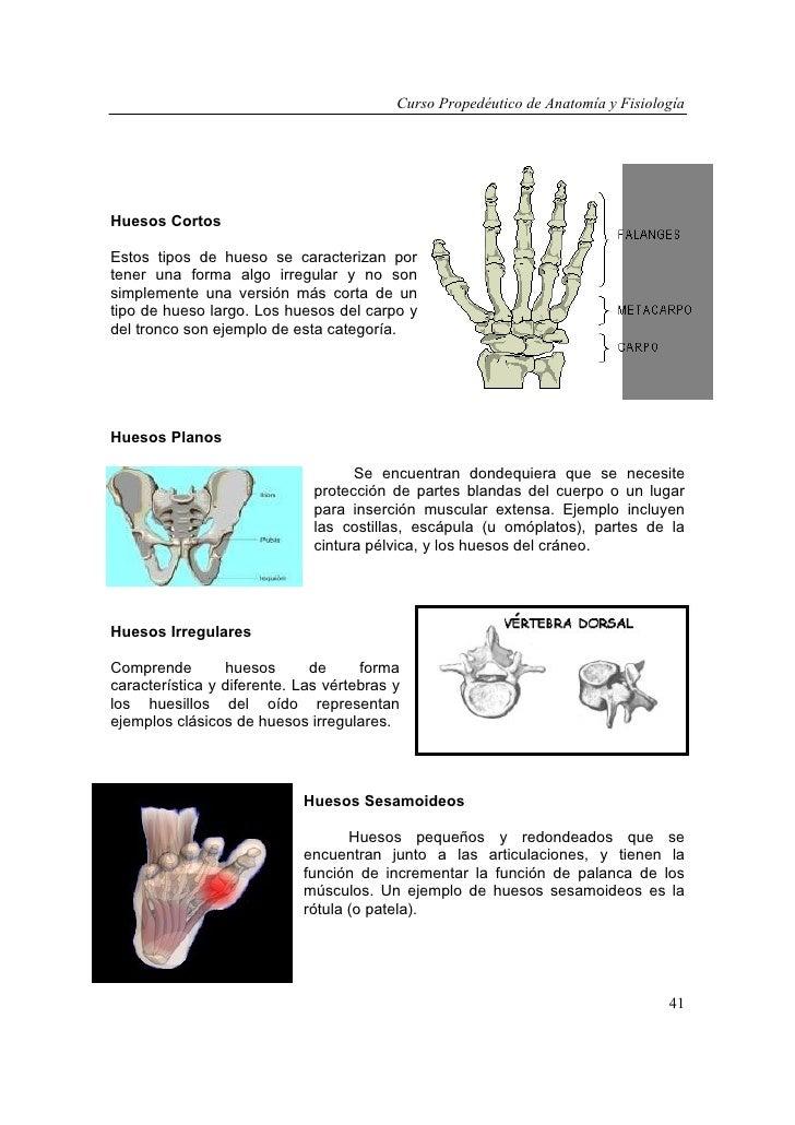 Asombroso Mejor Aplicación De La Anatomía Y Fisiología De Clase ...