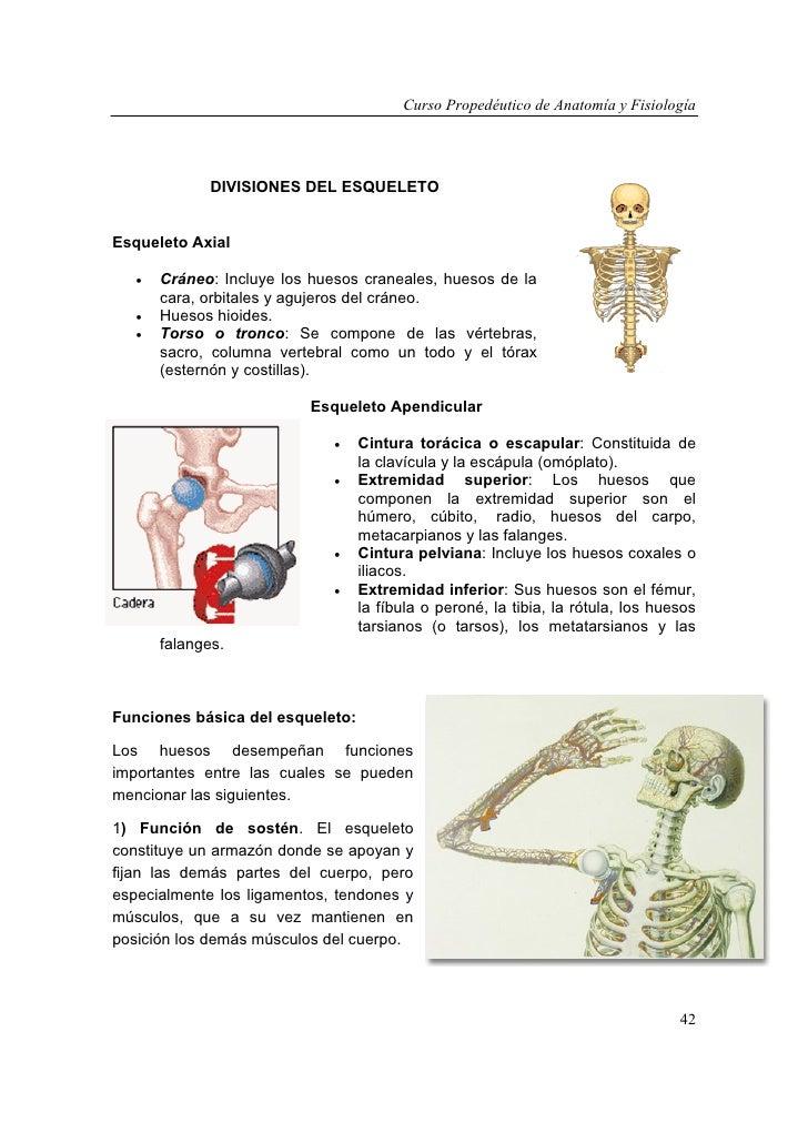 Vistoso Anatomía Y Fisiología Cráneo Motivo - Anatomía de Las ...