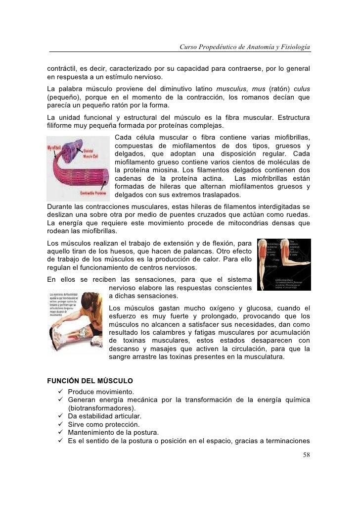 Encantador La Anatomía Y La Fisiología Del Rompecabezas De Palabras ...