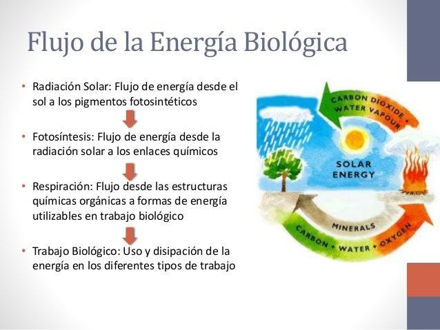 Biomoleculas bioquimica