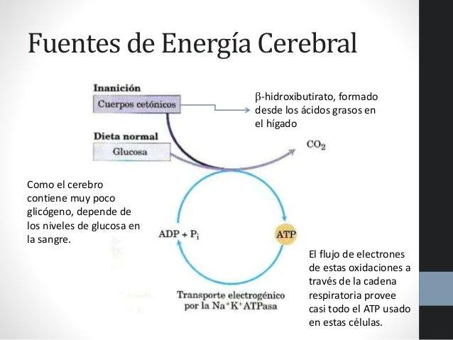 Presentacion de adp en el seb con espontaneo incluido - 1 10