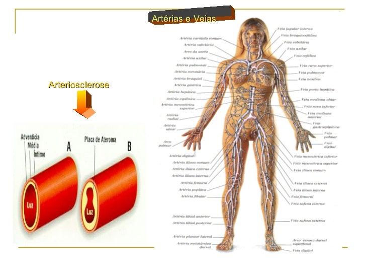 Resultado de imagem para fotos das veias do corpo humano
