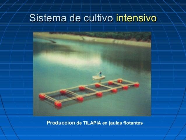 Curso de tilapia for Jaulas flotantes para piscicultura