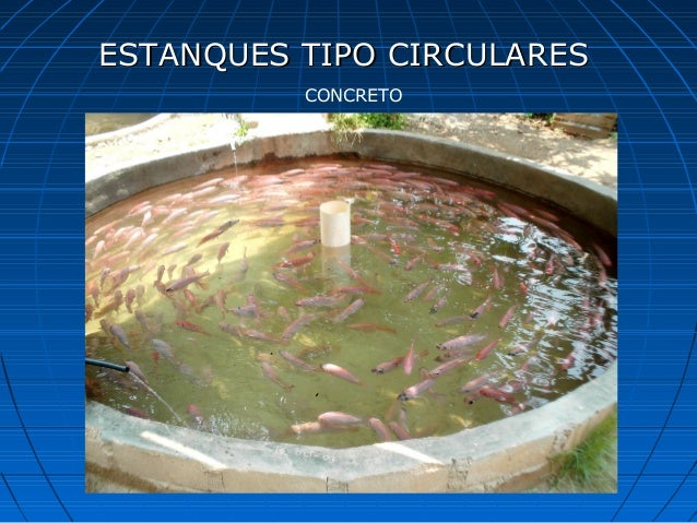 Curso de tilapia for Estanque de concreto